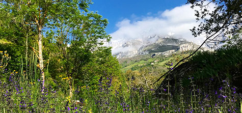 Picos edit 2, Mountain in the background and lush green trees