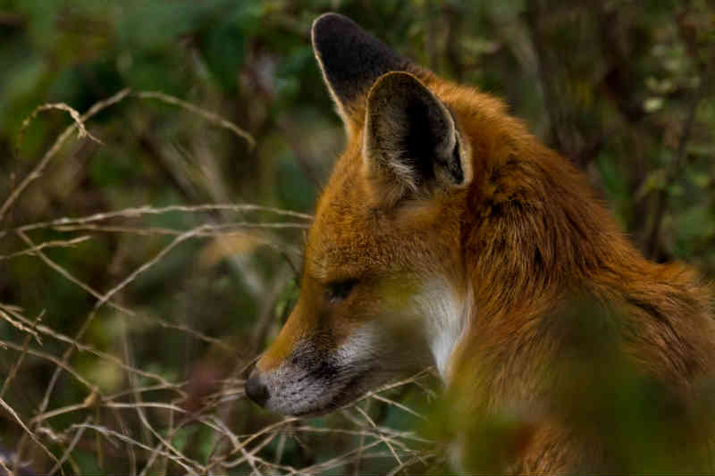 Where can I learn to be a 'wildlife cameraman'? | University